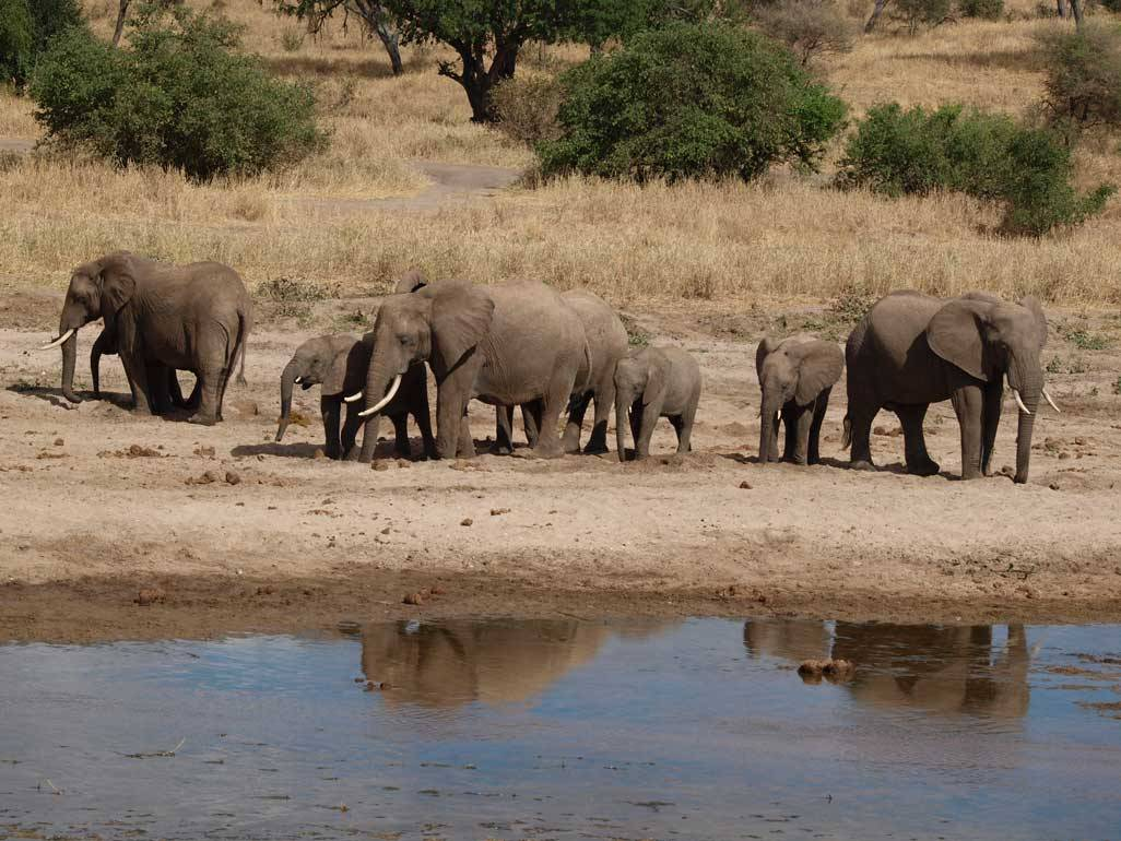 Safaris in Tansania